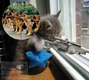 sunna_funny_cat_jpg_w300h267.jpg